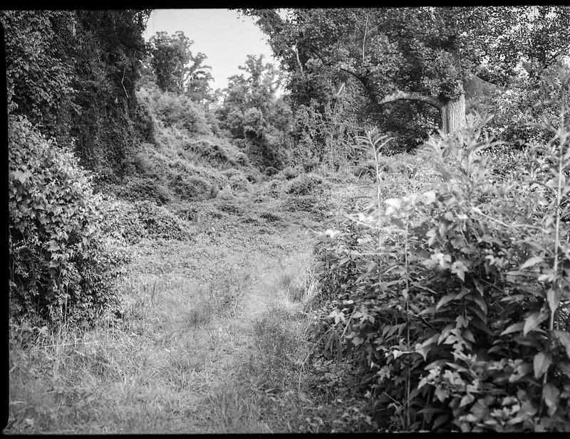 grassy pathway, forest's edge II, Biltmore Estate, Asheville, NC, Mamiya 645 Pro, Fomapan 200, Moersch Eco film developer, 7.20.20