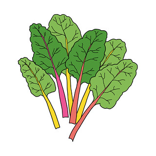 Johanna rainbow chard no border