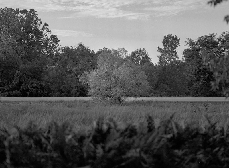 Field and Trees 4