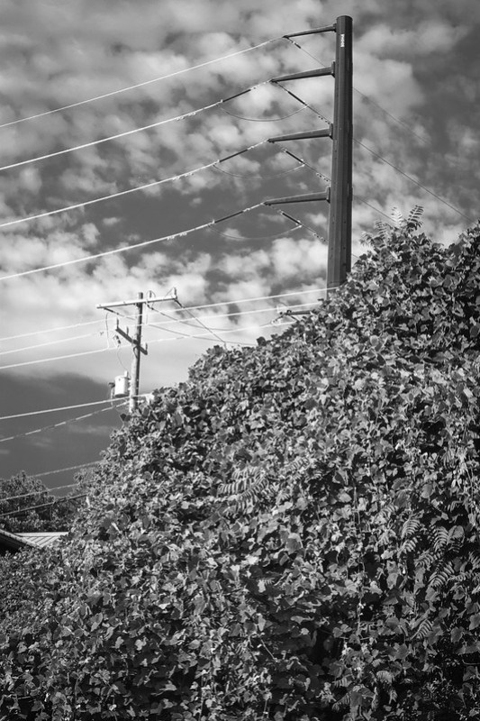 kudzu-covered landscape, powerlines, puffer clouds, railroad district, Asheville, NC, Nikon D3300, mamiya sekor 80mm f-2.8, 8.8.20