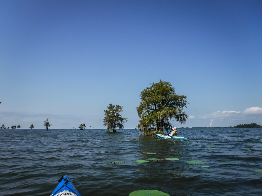 """""""The Jungle"""" on Lake Moultrie with Lowcountry Unfiltered"""