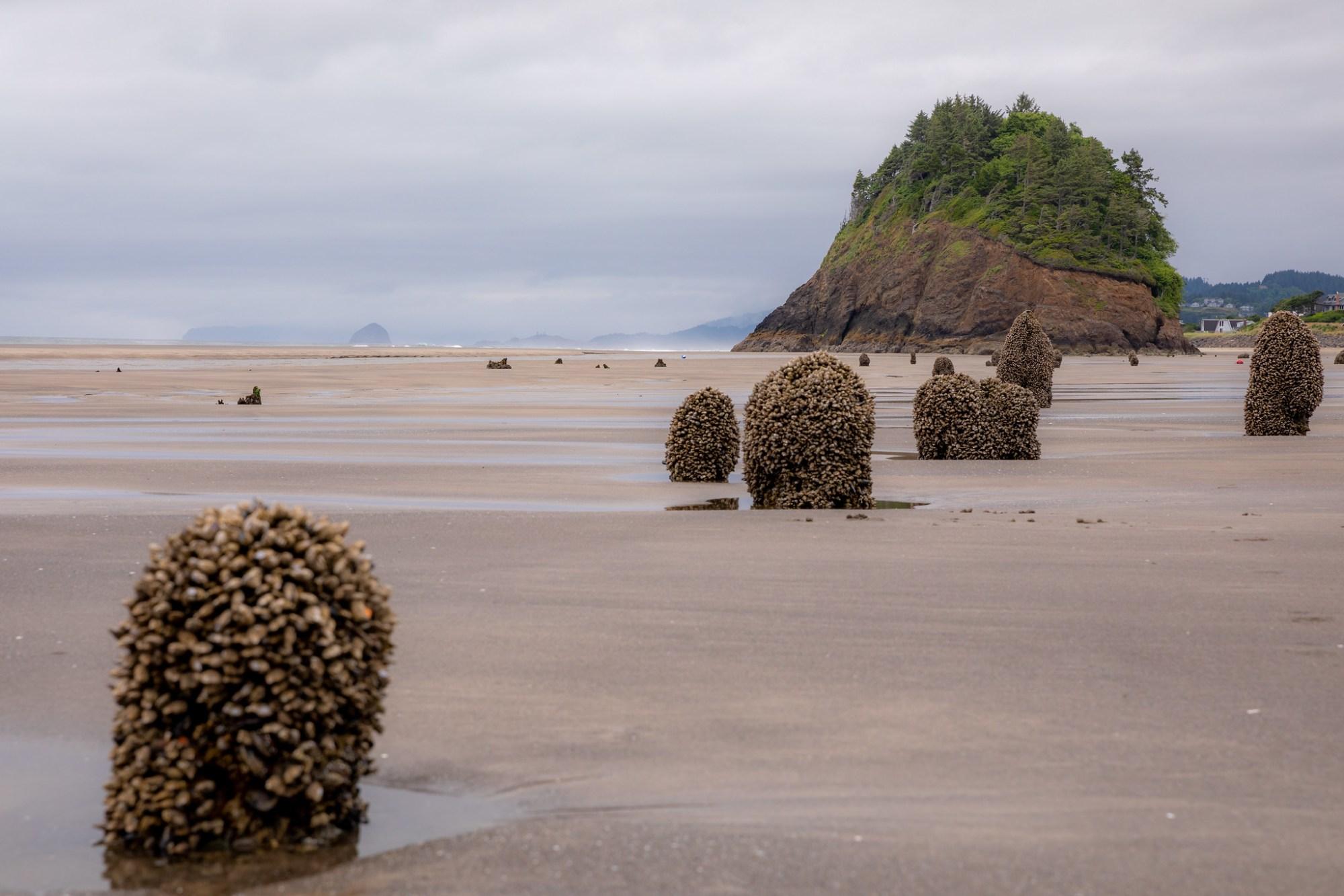 07.07. Oregon Coast