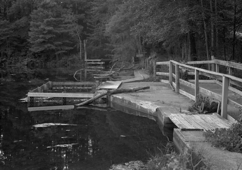 Delegan Pond & Brook Nature Study Area