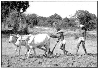 Class 8 Geography Chapter 4 Extra Questions and Answers Agriculture 1