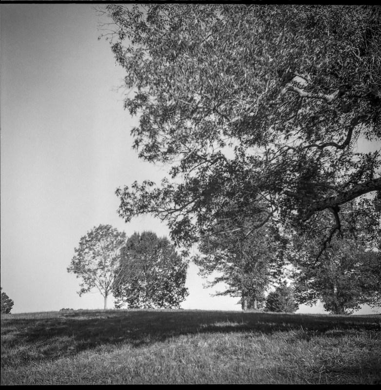 tree forms, near and far, pasture, late light, Biltmore Estate, Asheville, NC, Ricohflex Dia M, Fomapan 200, Moersch Eco film dveloper, 8.17.20