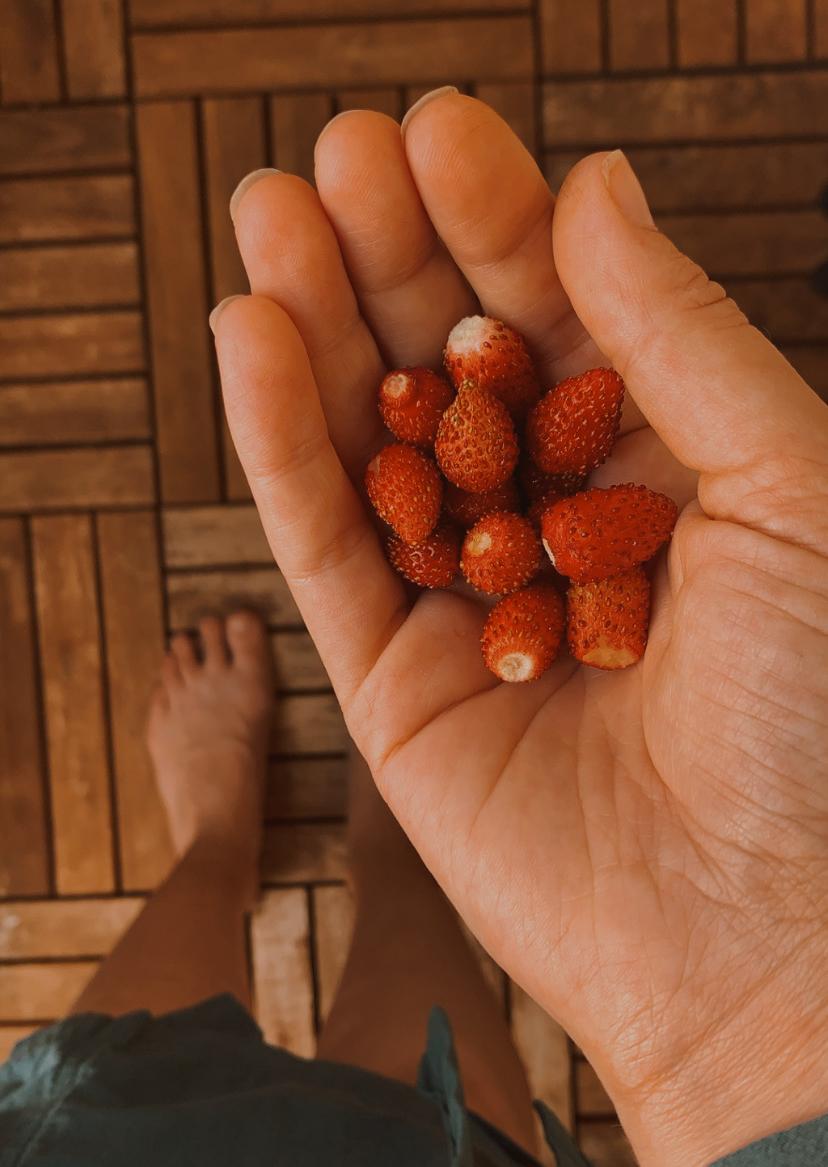 Wild strawberries from balcony - reaktionista.se
