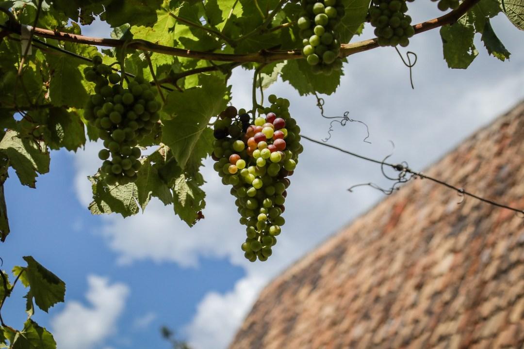 Strada del Vino dell'Alto Adige