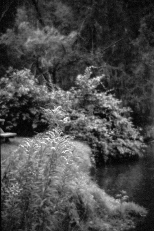Edge of Creek and Picnic