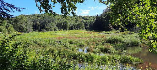 2020-09-05_Cranberry_Wilderness_060