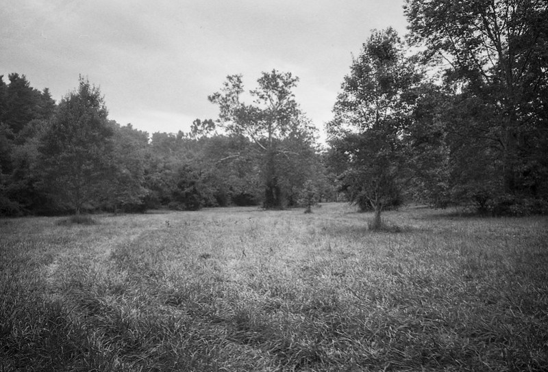 grassy meadow with tire tracks, tree forms, Biltmore Estate, Asheville, NC, Leica C1, Fomapan 200, Moersch Eco film developer, late August 2020