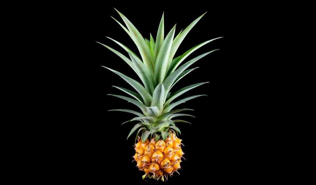 des-feuilles-ananas-pour-préserver-la-fraîcheur-des-aliments