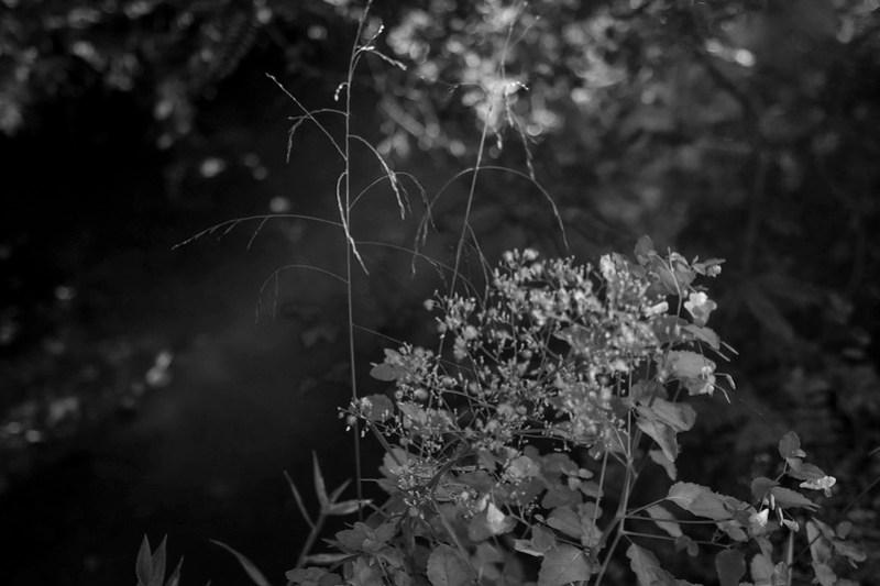 tiny wild blossoms, white and orange, wild grasses, lagoon-side, Biltmore Estate, Asheville, NC, Nikon D3300, mamiya sekor 80mm f-2.8, 9.13.20