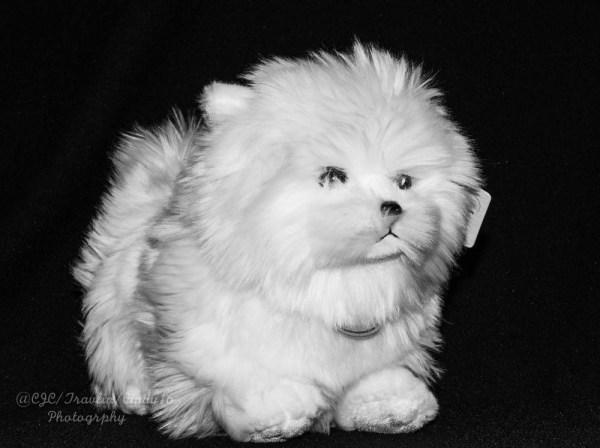 "DSC_6149-1-2  ~ ""#TREVOR CARPENTER PHOTO CHALLENGE 2019"" .... ~ ~ ""Week #38"" ~ ""PETS- DOMESTIC AND DOMESTICATED ANIMAL PORTRAITS"" ~ .... ~ 2020 ~."
