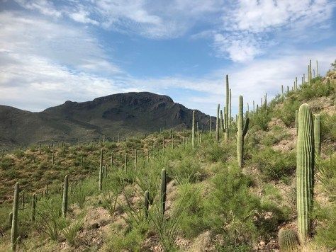Tucson Mountain Park