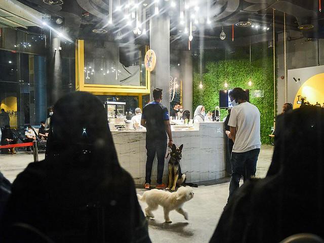 5770 The first dog café of Saudi Arabia opens in Khobar 07