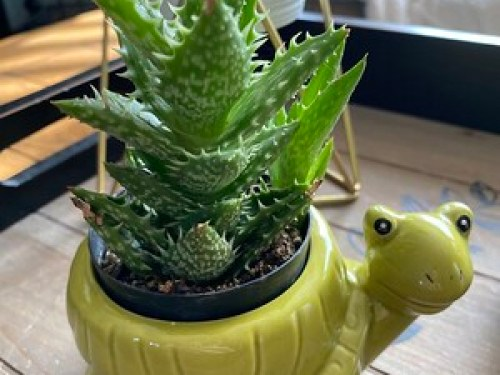 Plant Crazy!