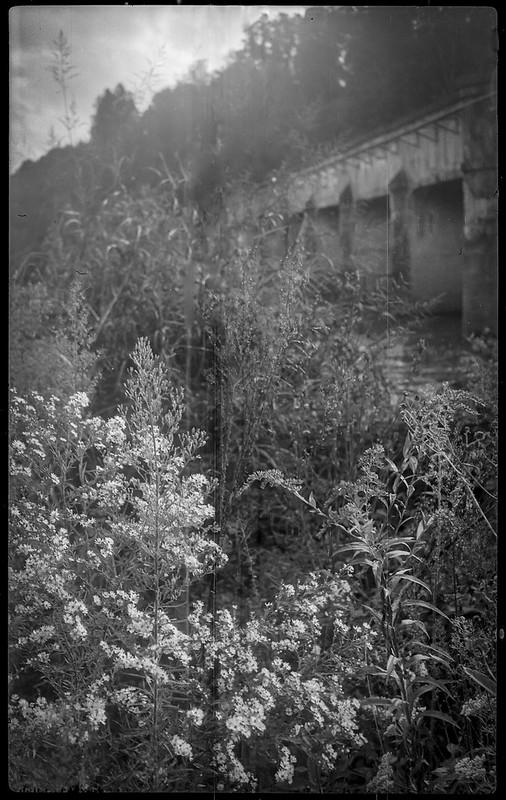 tall weeds and wildflowers, abandoned railroad bridge, Riverside Drive, Asheville, NC, Kochmann Korelle folding 127 film camera, Kodak TMAX 400, HC-110 developer, 10.1.20
