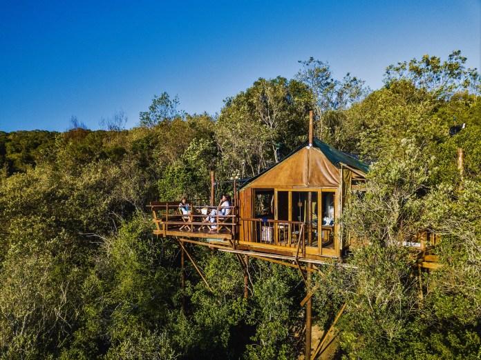 樹屋 Teniqua Treetops 1