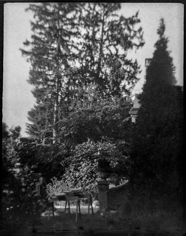 neighborhood vista, tall trees, saw horses, Asheville, NC, Ferrania Tanit, Fomapan 400, Moersch Eco Film developer, 10.10.20