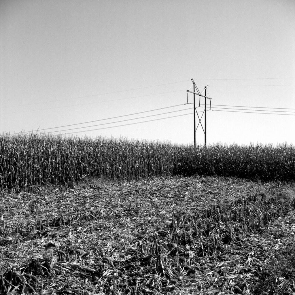 Mowed down cornfield