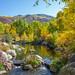 scene at John Denver Nature Sanctuary, Aspen