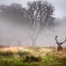 Misty morning glory