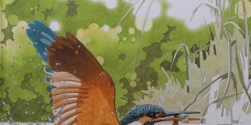 《翠鳥》我也深深被翠鳥所吸引