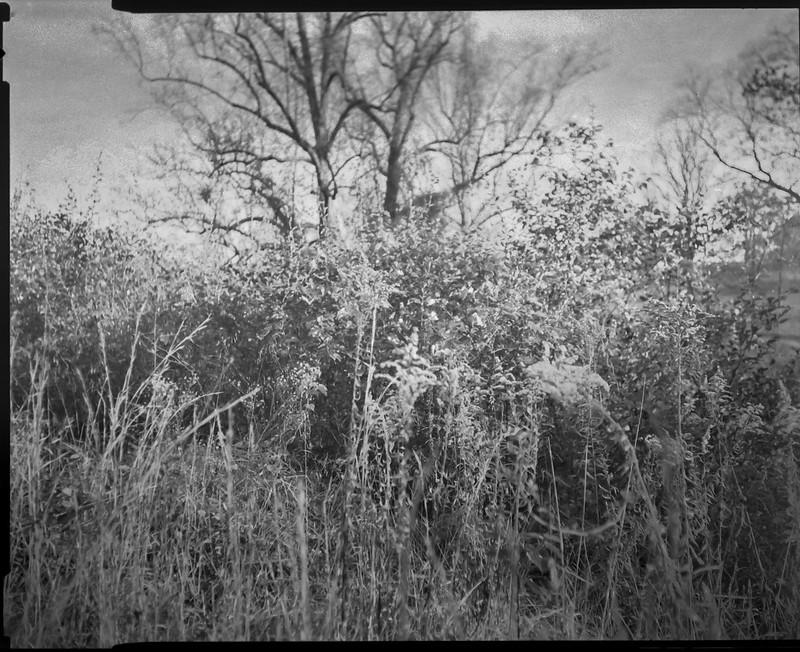 early winter landscape, bramble, Biltmore Estate, Asheville, NC, Graflex Crown Graphic, Graflex Optar 90mm f-6.8, Bergger Pancro 400, HC-110 developer, 10.31.20
