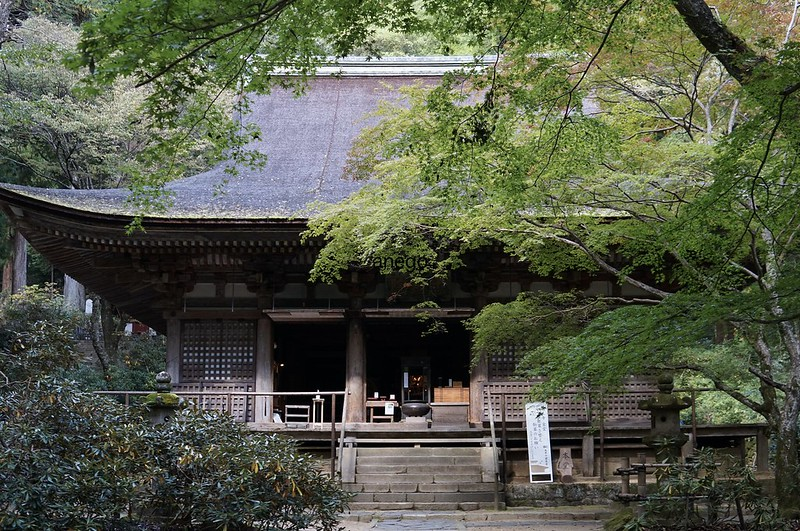 室生寺 本堂と青紅葉