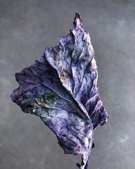 Ornamental Kale Leaf