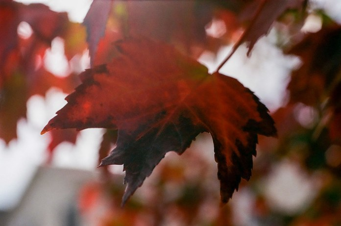 Leaf flare