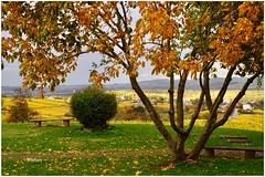 Un paseo en otoño