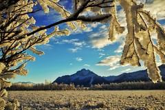 Frost-Framed Pioneer Peak