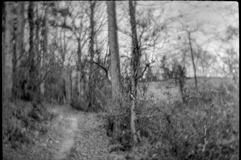 winter landscape, pathway, forest's edge, near dusk, Biltmore Estate, Asheville, NC, Bencini Koroll 24S, Foma 400, HC-110 developer, 11.22.20