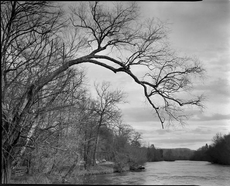 dusk, overhanging branches, French Broad River, Biltmore Estate, Asheville, NC, Graflex Crown Graphic, Schneider Symmar f-5.6, 150mm, Bergger Pancro 400, HC-110 developer, 11.22.20