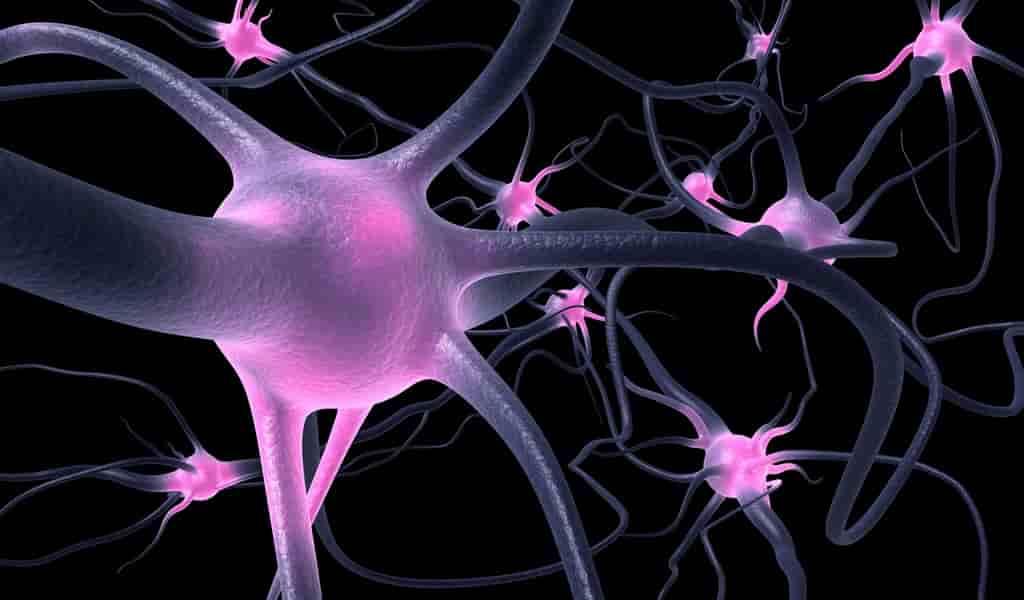 Alzheimer-un-réseau-enzymes-explique-la-perte-des-synapses