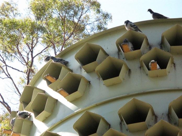 澳洲墨爾本的公園batman park,設計了專門管理鴿子的建築。照片來源:維基百科/Nick carson(public domain)