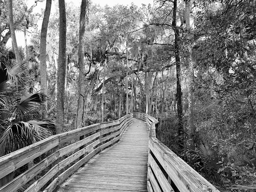 Boardwalk at Blue Spring State Park