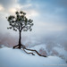 Snowy Tree at Bryce