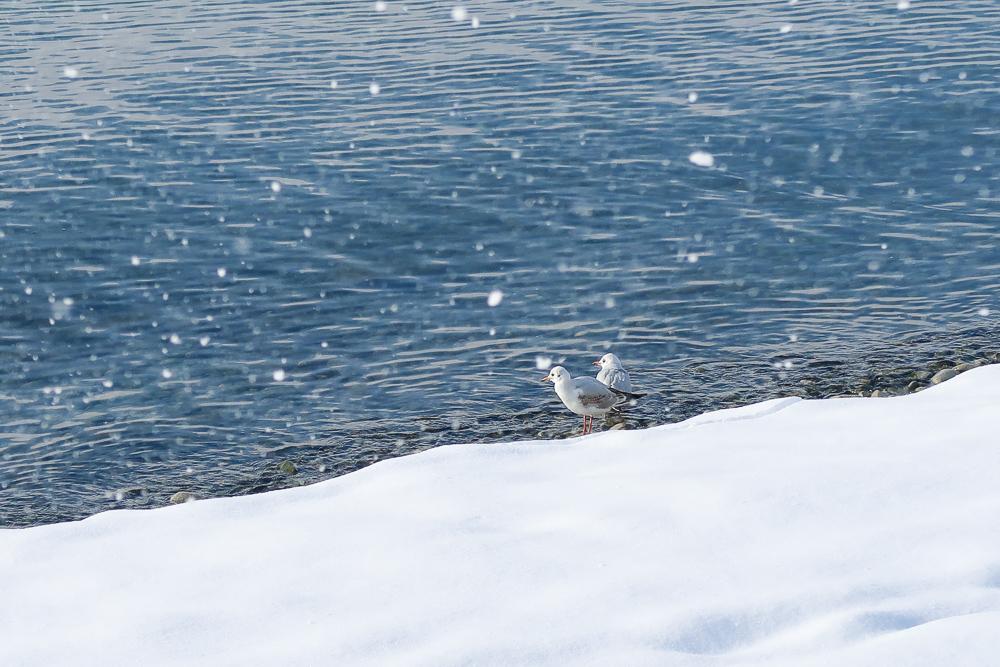 Schnee Spaziergang Friedrichshafen am Bodensee Januar 2021 hyyperlic-38