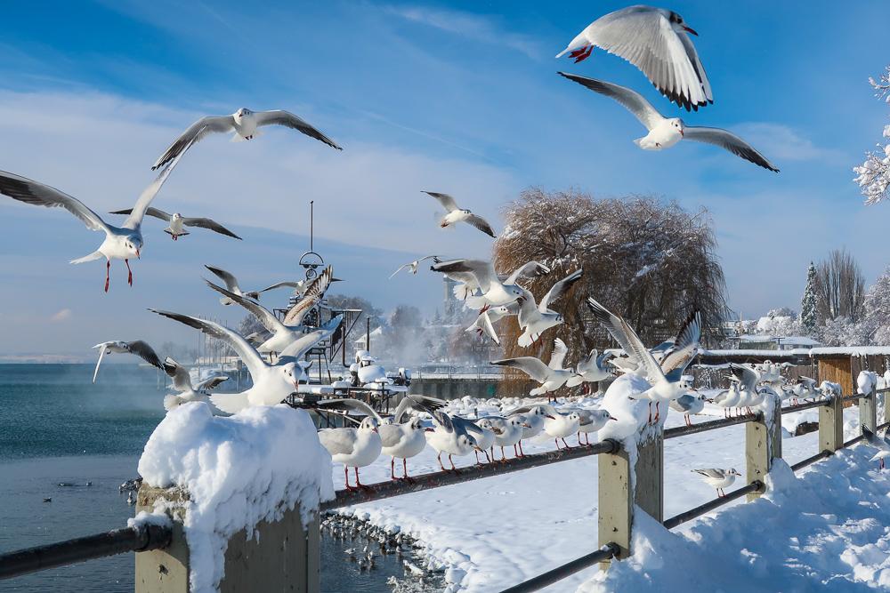 Schnee Spaziergang Friedrichshafen am Bodensee Januar 2021 hyyperlic-46