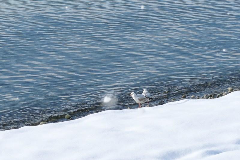 Sightseeing Walk Snow Lake Constance Friedrichshafen January 2021 Blog JoyDellaVita-27
