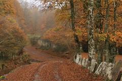 Paisaje rural de los Pirineos