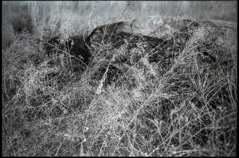 boulder, wildflowers, grasses, weeds, abandoned field, River District, Asheville, NC, Minolta XG-M, Super Albinon 28mm f-2.8, Fomapan 400, HC-110 developer, 1.16.21