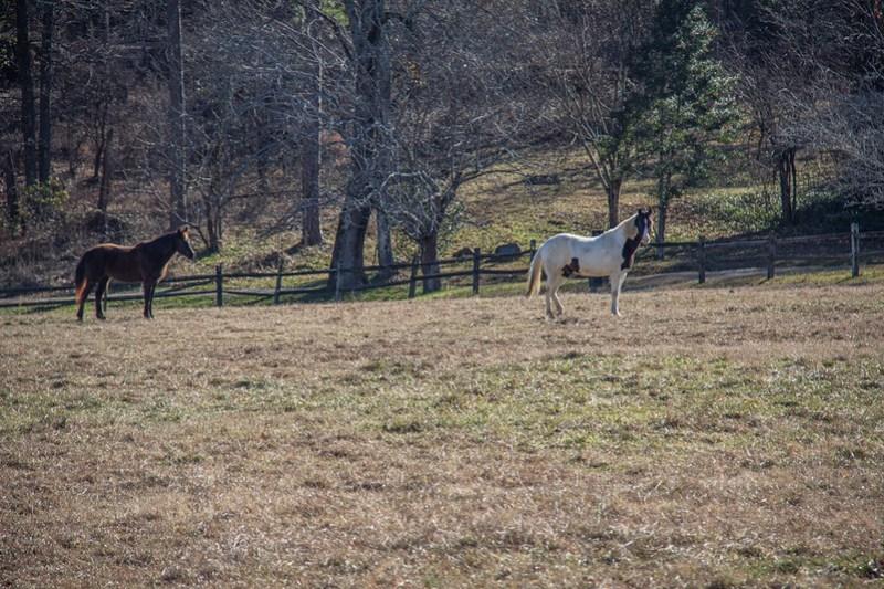 Reflection Riding Arboretum38