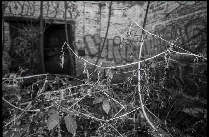 interior, abandoned mill, dried plant forms, late light, urban decay, River District, Asheville, NC, Minolta XG-M, Super Albinon 28mm f-2.8, Fomapan 400, HC-110 film developer, 1.16.21