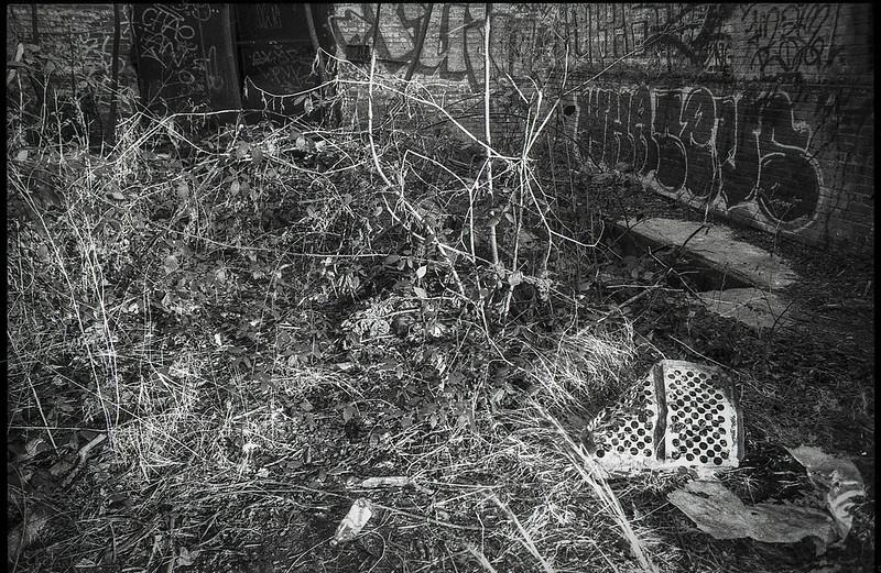 interior, abandoned mill II, dried plant forms, urban decay, River District, Asheville, NC, Minolta XG-M, Super Albinon 28mm f-2.8, Fomapan 400, HC-110 film developer, 1.16.21