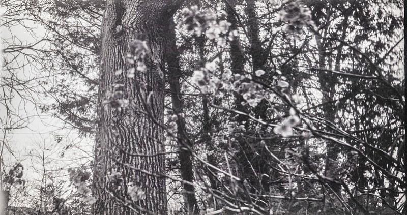 tree stand, winter landscape, dried floral forms, Asheville, NC, Eastman Kodak No. 2 Bulls Eye Model D, Foma 200, Moersch Eco Film Developer, 1.30.21