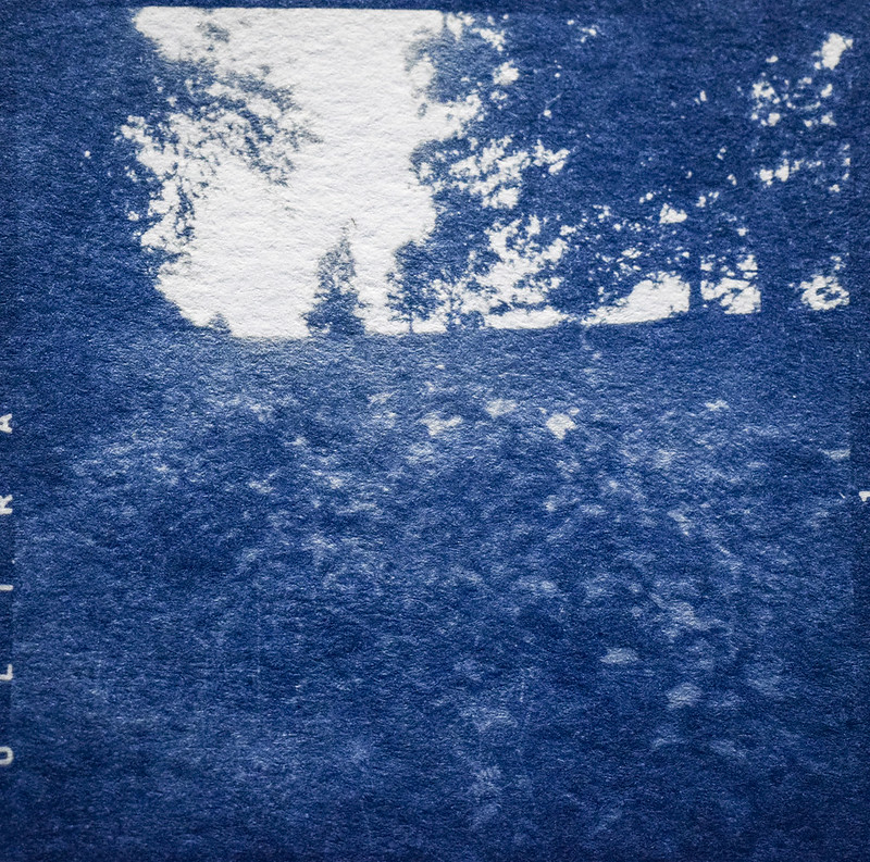 landscape, Biltmore Estate, Asheville, NC, cyanotype, medium format negative, 6x6, shot with Ricohflex Dia M twin lens reflex