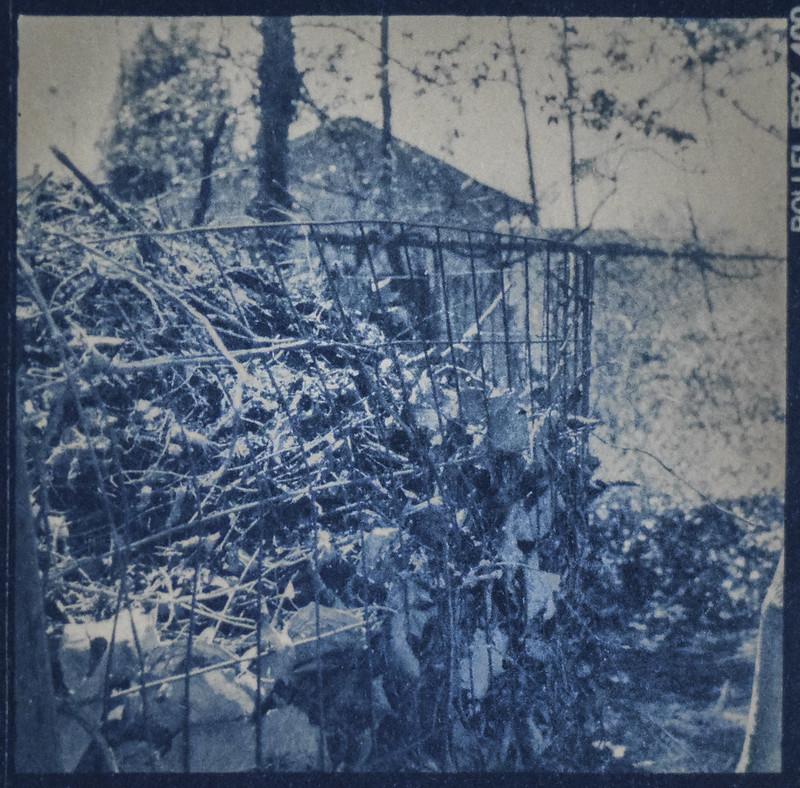 wire fence, compost heap, back yard, Asheville, NC, cyanotype, 6x6 medium format film negative, Richoflex Dia M, April 2017